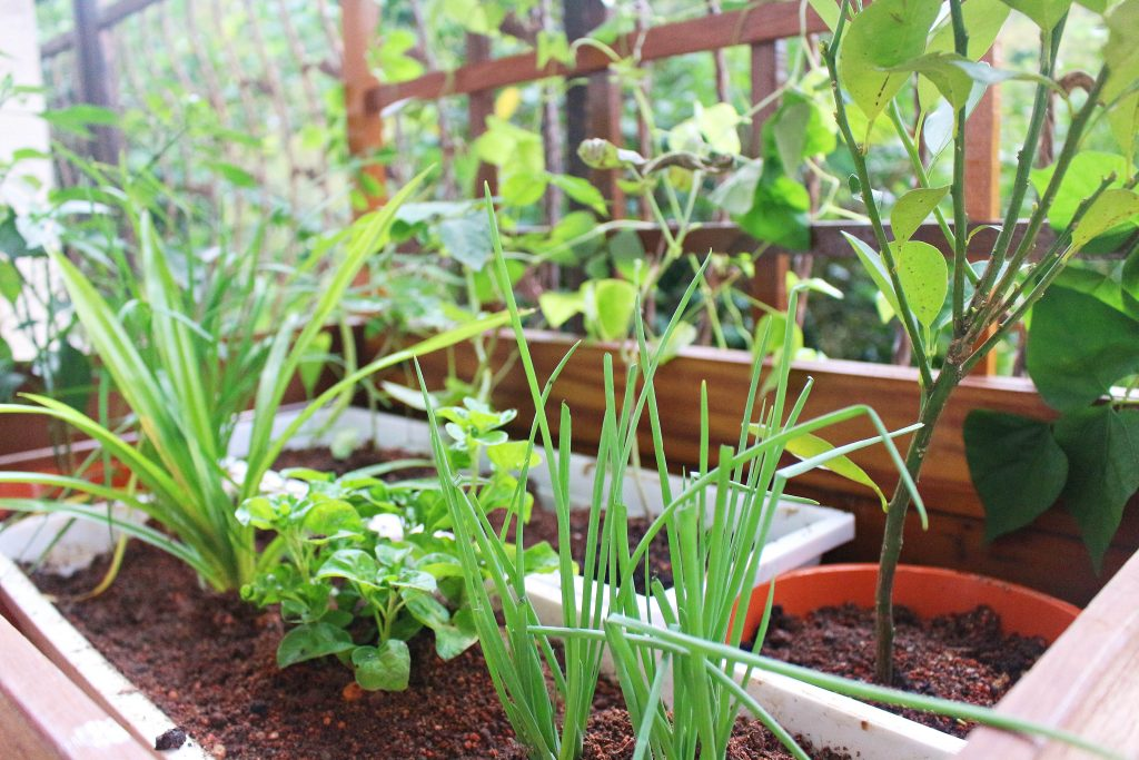 Planter Box 9-min