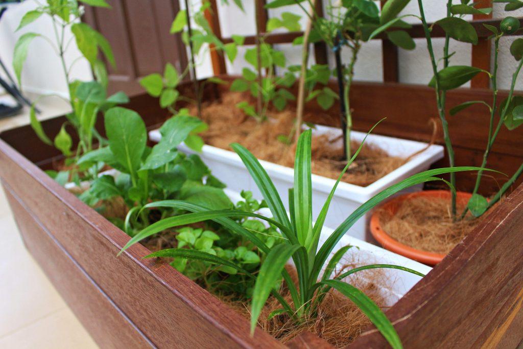 Planter Box II (1)-min