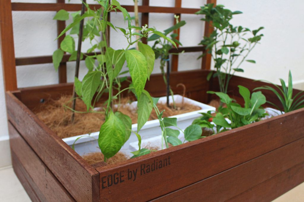 Planter Box II (22)-min