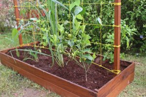 Raised Bed 10-min