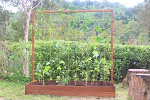 Raised Bed 2-min