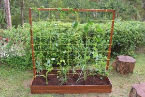 Raised Bed 5-min