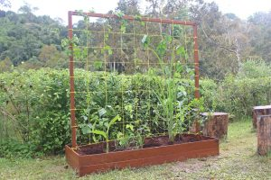 Raised Bed 6-min