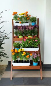 Ladder Planter_Flowers LQ