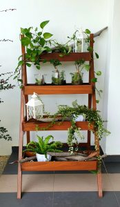 Ladder Planter_Greenery LQ