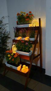 Ladder Planter_Sweet_Night 5 LQ